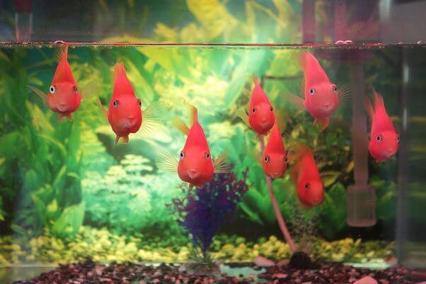 Why Fish Make Sad Classroom 'Pets'   PETA