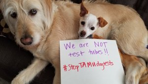 Dogs used in experiments need your help! Yes, DOGS.