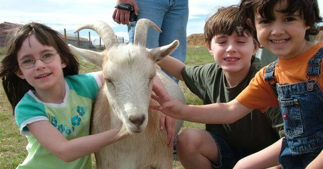How to Teach About Animals and Responsibility Without Class 'Pets'
