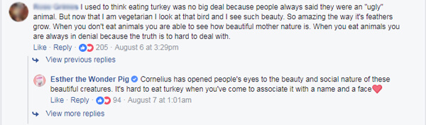 turkey videos starring cornelius have inspired people to look at turkeys in a new light