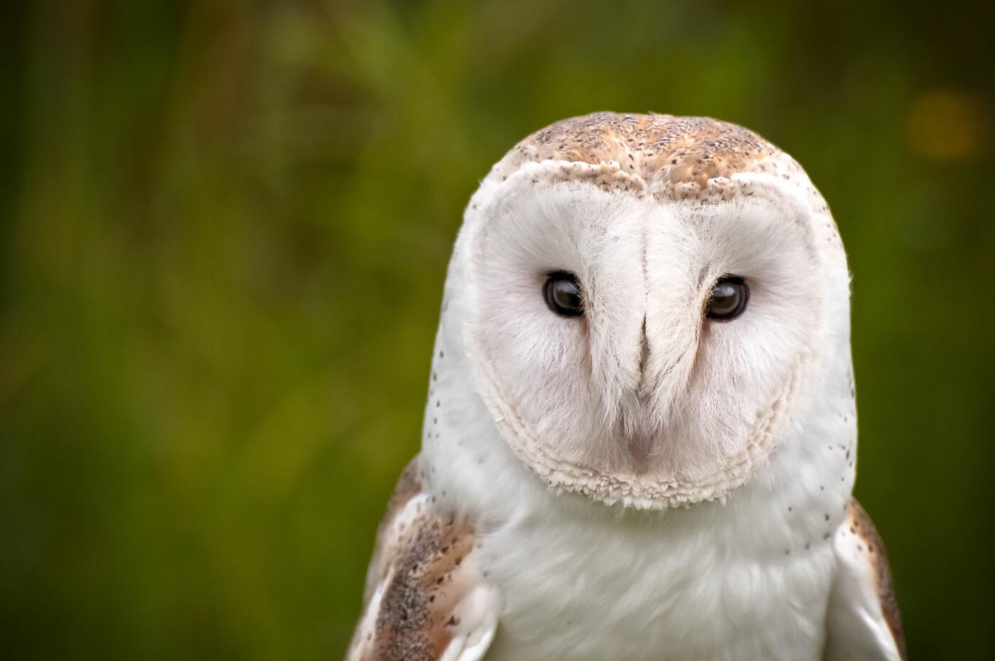 Owl Expert Opposes Cruel Experiments at Johns Hopkins   PETA