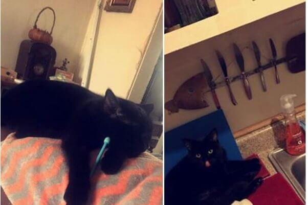 Two photos of black cat, one of him on back of couch and the other next to kitchen sink