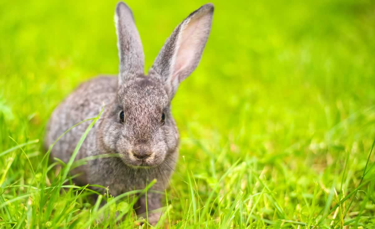 Avon Products, Inc., Earns 'Working for Regulatory Change' Listing From PETA