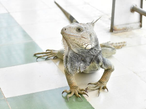 The Dangers of Bringing Reptiles and Amphibians Into Your