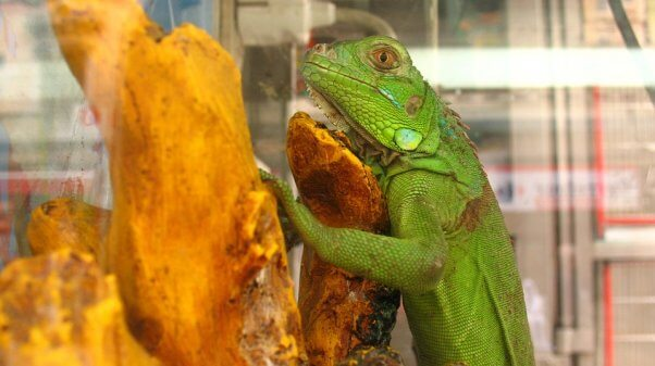 The Dangers of Bringing Reptiles and Amphibians Into Your Classroom
