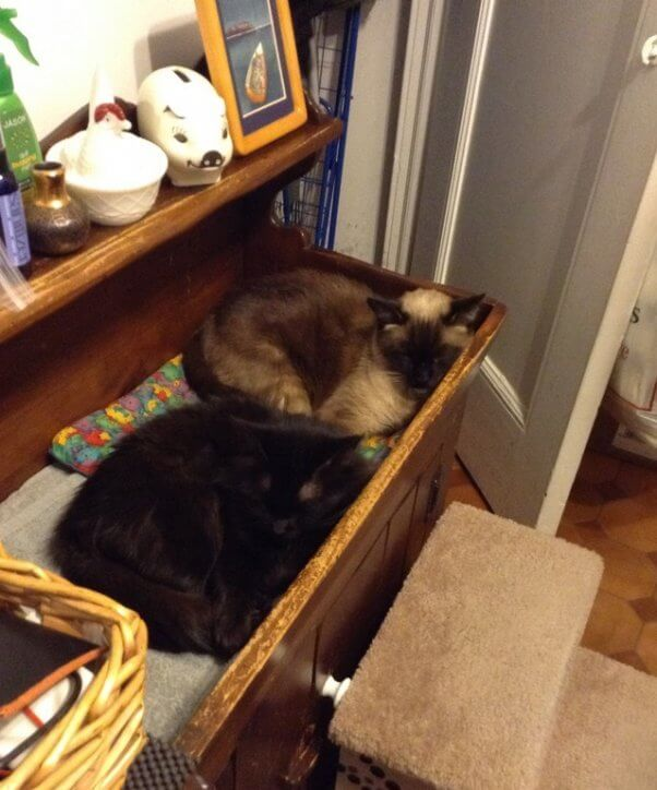 PETA rescued cats Mickey and Raisinette sleeping in their new forever home