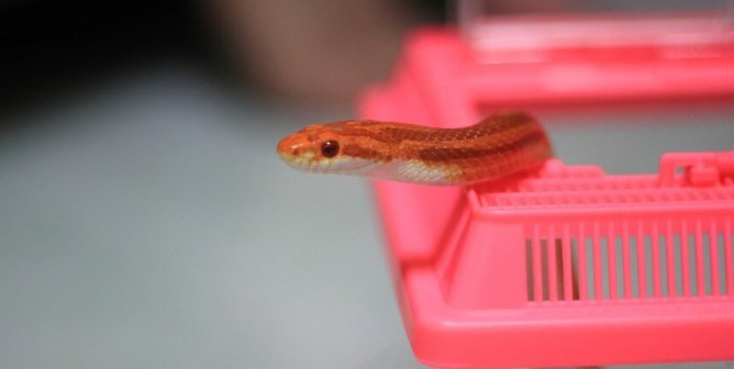 Here's Why Buying Snakes—or Other Reptiles—Is a Big Mistake