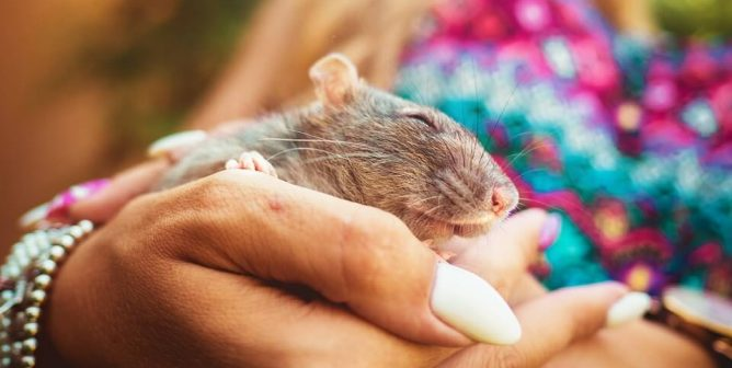 Beautiful: Mice, Rats Rescued From Lab See Sunshine for the First Time