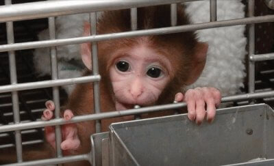Speak Out Against Animal Testing With FREE Bumper Sticker!