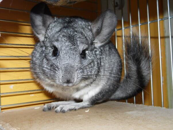 Rabbits Rodents And Other Small Mammals Don T Want To Be Your Class Pets Peta