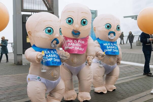 giant inflatable PETA babies crash a dairy conference in Vancouver