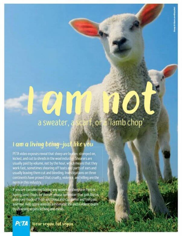 PETA Ad rejected by Mall of America shows a sheep and cautions against buying products derived from animals