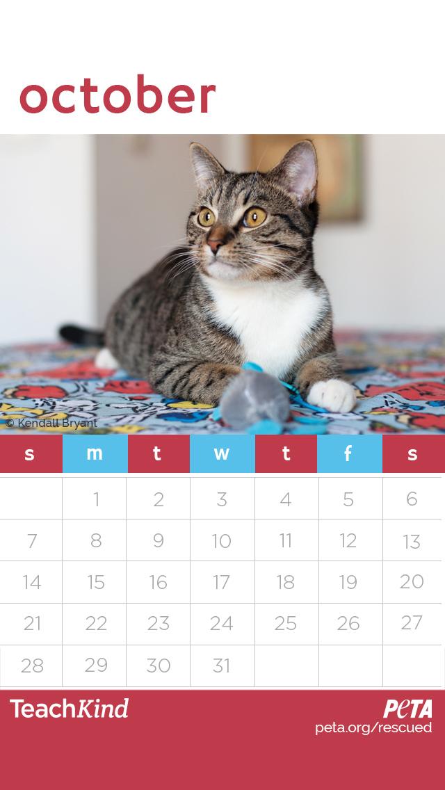 Free 2018 Rescued Desktop Wallpaper Calendars For Teachers Peta