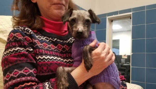 Cute small dog in purple sweater being held by woman