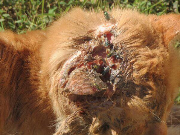 Injured Outdoor Cat on Grass