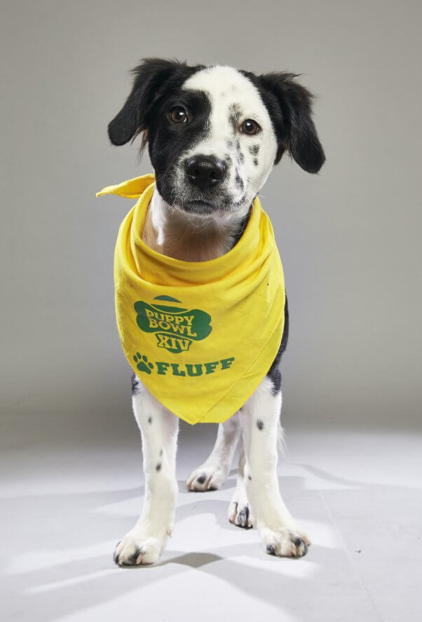 peta rescues, rescued dog