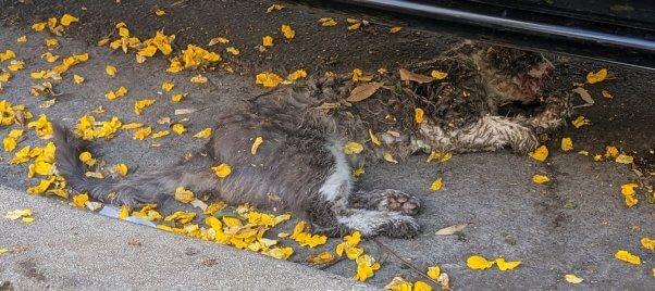 Injured Outdoor Cat