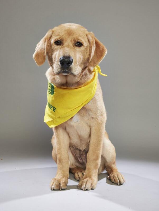 peta rescues, recsued dog