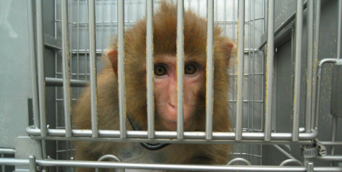 PETA Thanks Jack Dorsey for $1B COVID-19 Relief—but What About Animal Tests?
