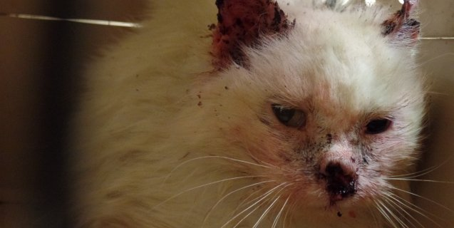 Horrific 'Outside Cat' Stories (Updated August 2019) | PETA