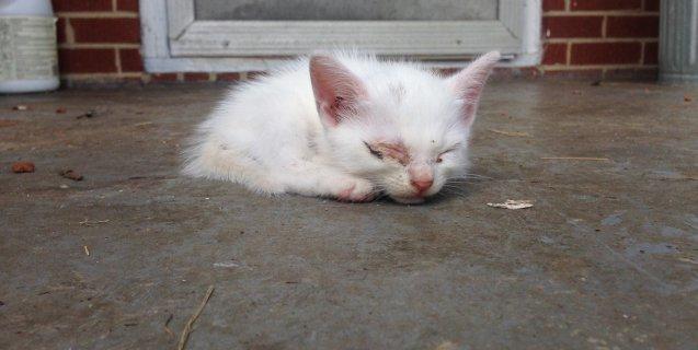 Horrific 'Outside Cat' Stories (Updated July 2019) | PETA