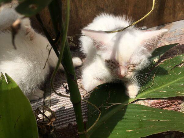 Horrific 'Outside Cat' Stories (Updated November 2019) | PETA