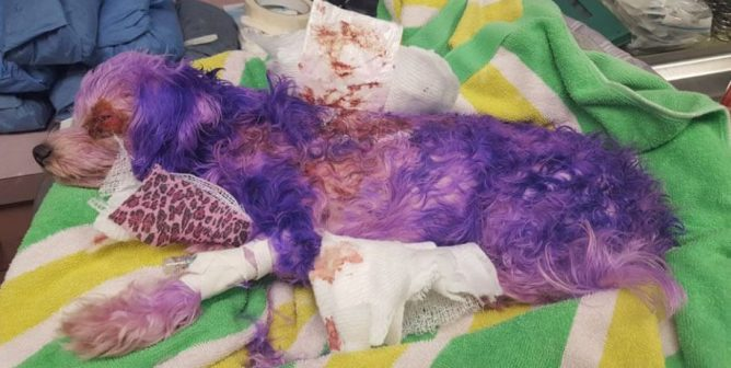 Here's Why You Should Never Dye Your Dog's Fur