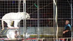 Tell Brian Franzen to Stop Forcing Animals to Perform in Circuses!
