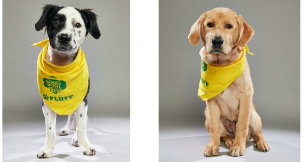 bear and macchatio, peta rescues who played in puppy bowl xiv