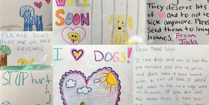 Save Dogs With These Classroom Activities