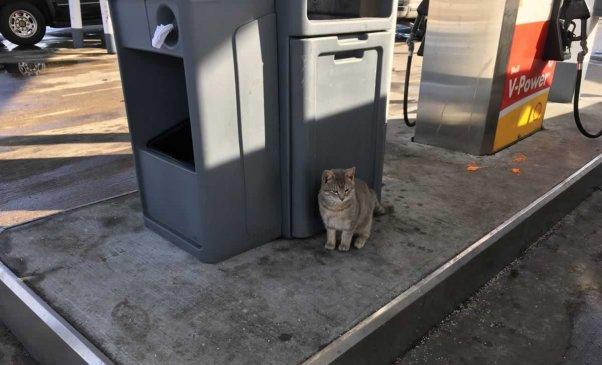 Orange tabby cat sitting at gas pump