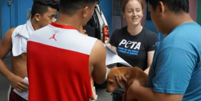 Traveling in the Philippines? Volunteer to Help Animals