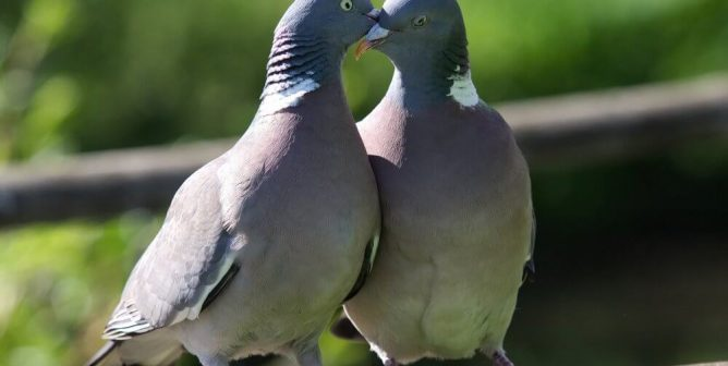Valentine's Day: What Do Animals Love?