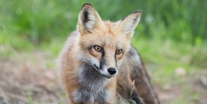 VICTORY: Kering Is Going Fur-Free!