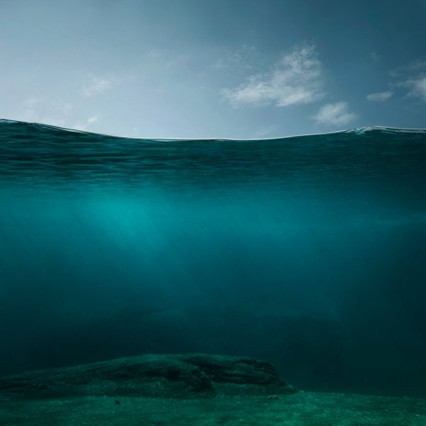 empty oceans, overfishing
