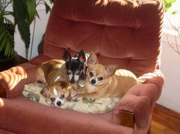 puppy mills, breeders, purebred dogs