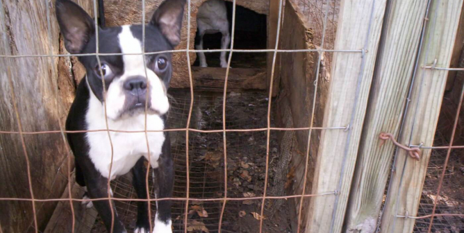 Federal Bill to Hold USDA and Animal Exploiters Accountable: Urge Your Representative to Sign On!