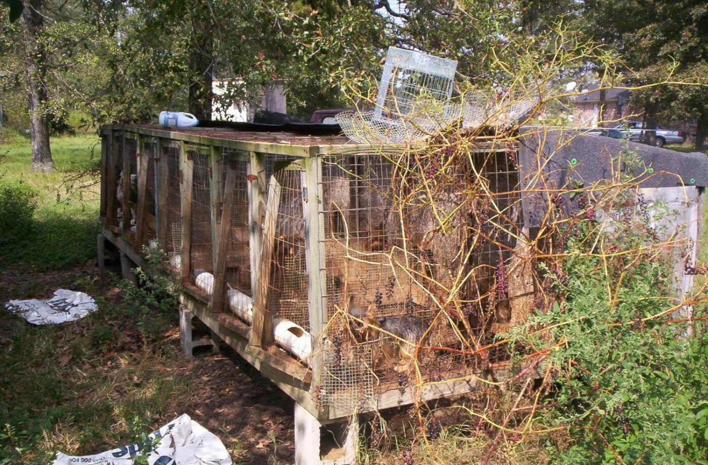 Filthy, broken-down enclosures at puppy mill