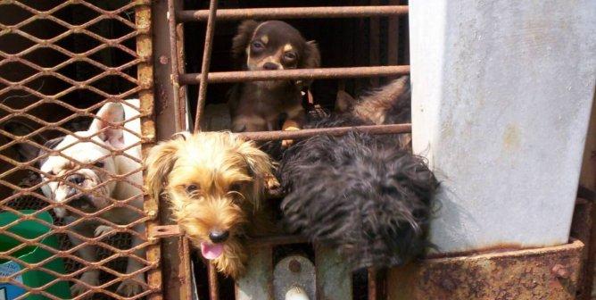 'HuffPost' Investigates the Dark Side of 'Dog Rescue' Culture
