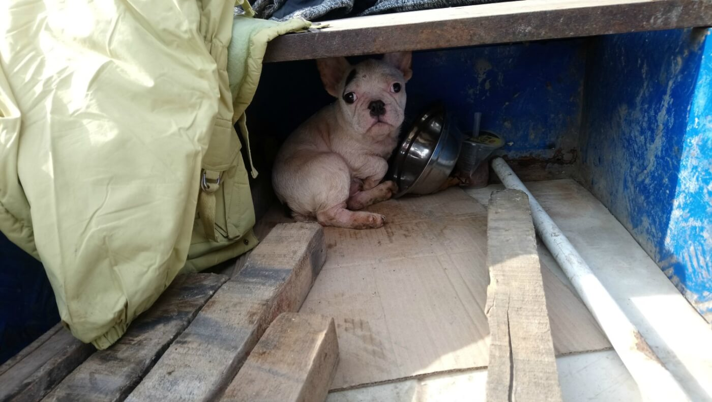 Small white dog huddled in back of enclosure with what appears to be an empty bowl