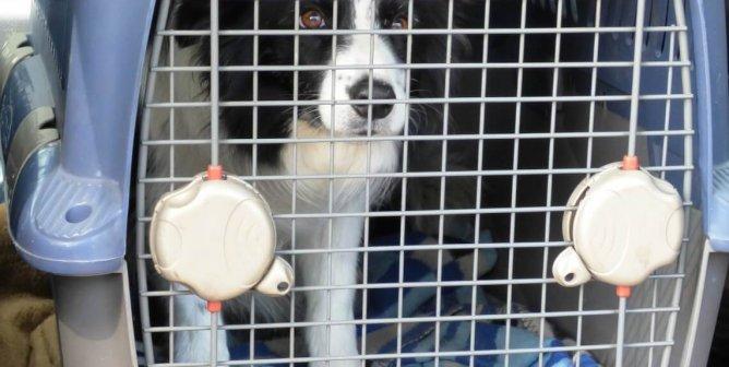 Dog Dies in Airport Warehouse—PETA Wants Cargo Company Held Responsible