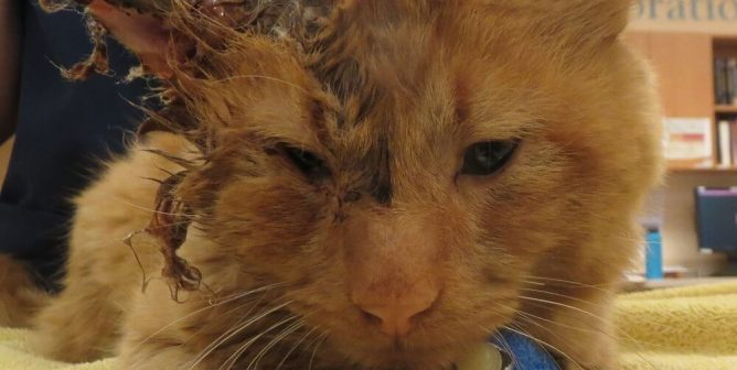 Ravaged by Disease, Roman Was Betrayed by Trap-Neuter-Release Advocates