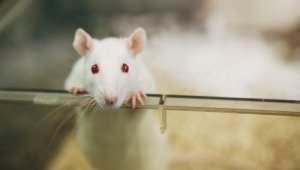 Animals in Experiments