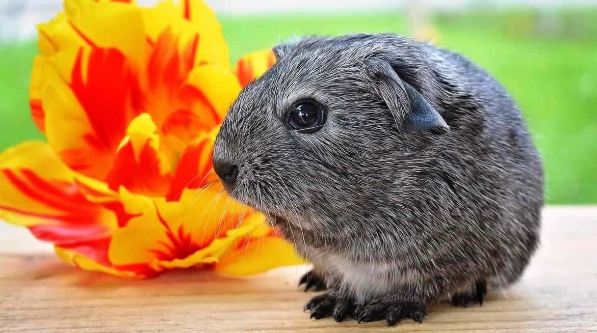 PETA's Research Modernization Deal Kicks Animal Tests to the Curb