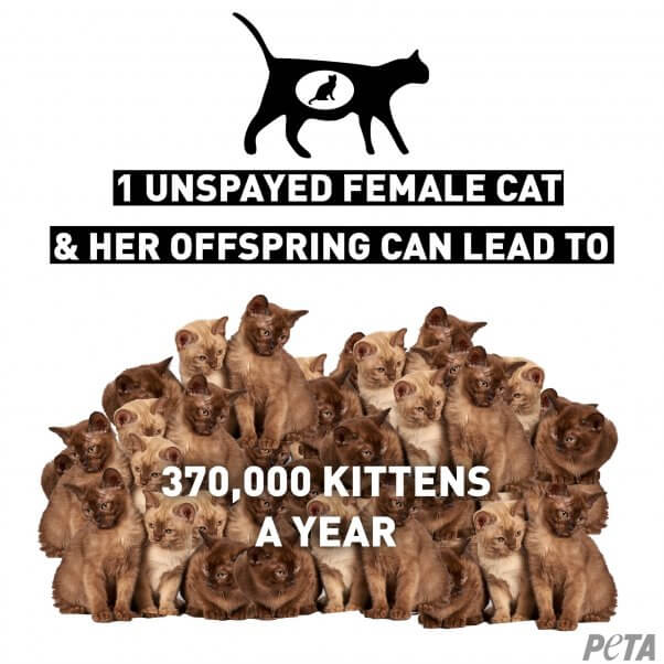 Spaying and Neutering: A Solution for Suffering | PETA