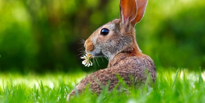 Victory! India Strengthens Ban on Importing Cosmetics Tested on Animals