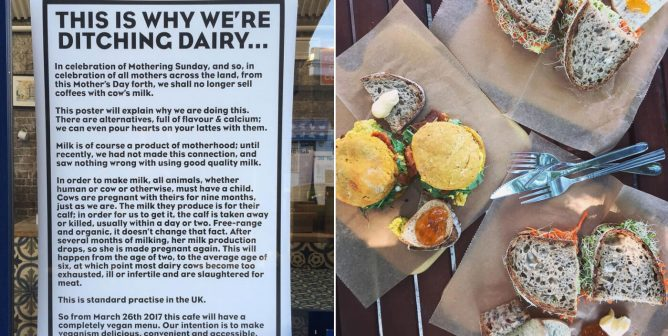 Recipe for Success: These Businesses Went Vegan and Flourished