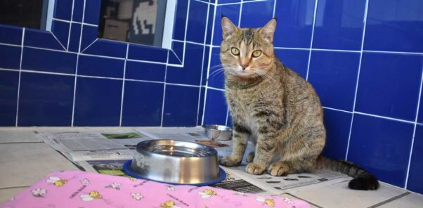 Violet in blue-tiled room with food and water bowls