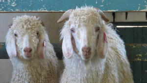 The Mohair Industry