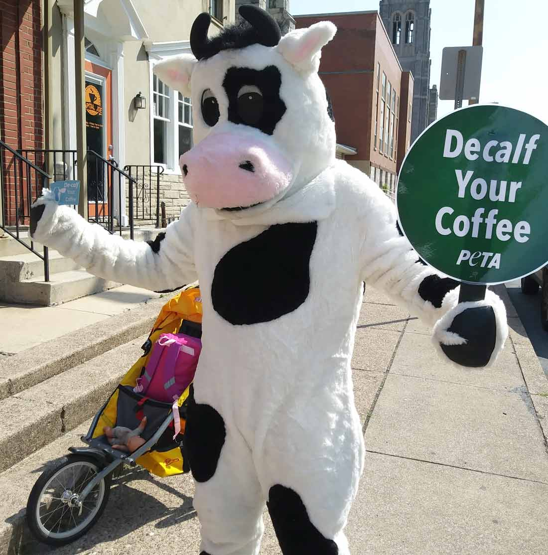 peta mascot cow at a decalf your coffee demo (2018)